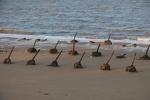 W-016 Fortezza 據點 - Spiaggia di Gǔníngtóu Lóngkǒu - 古寧頭 嚨口 - 038